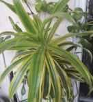 Top 10 Anti Pollution Air Cleaning Plants For Indoors Which Are Natural Air Purifier
